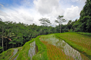 Rice terrace view from Dhanya Room